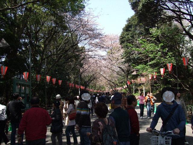 08_0406上野花見0002.JPG