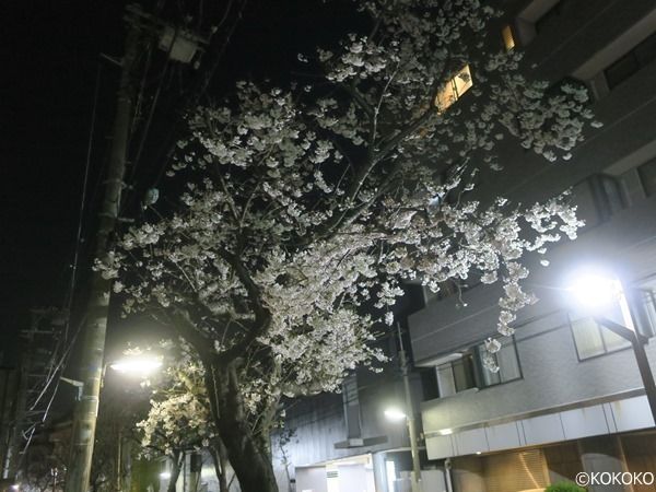 IMG_5208.JPG